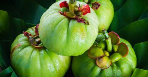 Garcinia Cambogia Veda per dimagrire